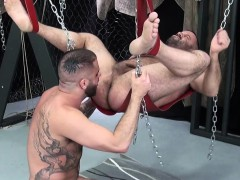muscly-stud-dominates-suspended-bear