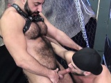 Dilf bear cocksucked in bareback threesome